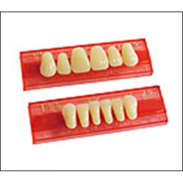 Зубы New Ace Anterior фронтальные